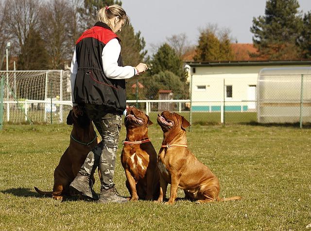 A la découverte du métier de comportementaliste canin